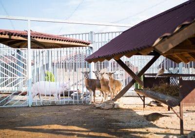 Artemida Zoo (2)