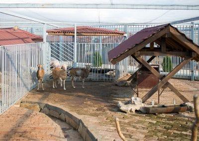 Artemida Zoo (3)