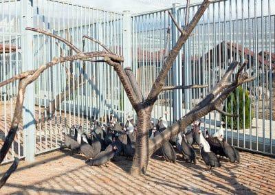 Artemida Zoo (4)