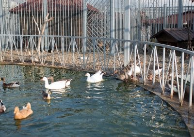 Artemida Zoo (7)
