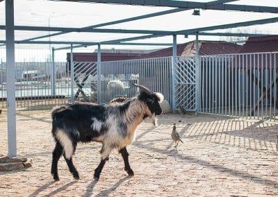 Artemida Zoo (9)